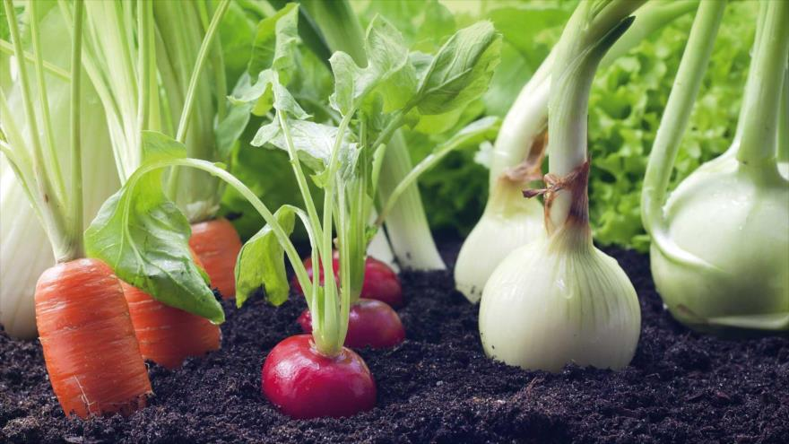 ¿Qué alimentos de origen vegetal son aptos para consumir y cómo se deben preparar?